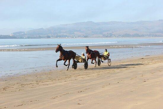 Waikouaiti, نيوزيلندا: Horses in the morning.
