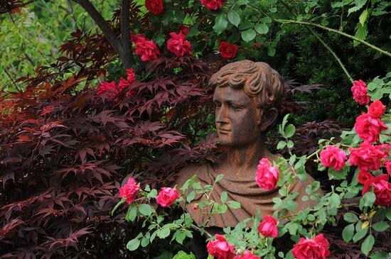 Romeo mit Rosenblüten