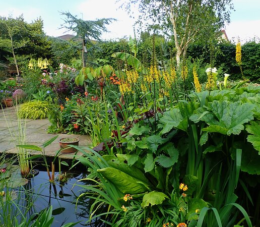 The water garden at Ardan Garden, Howth