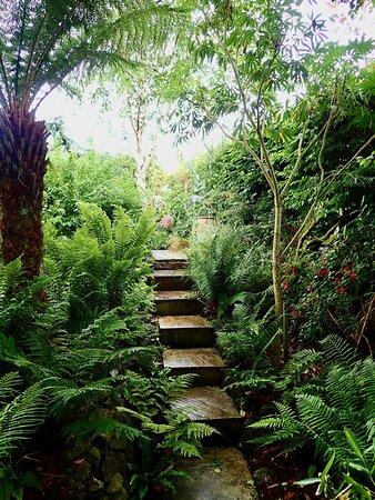 Leafy exuberance at Ardan Garden, Howth