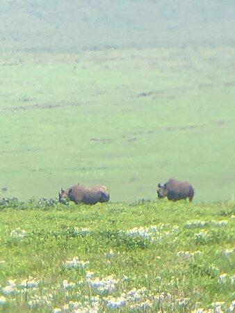 Cratère du Ngorongoro, des rhinocéros vu de loin
