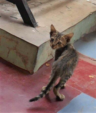 Kitten in the restaurant