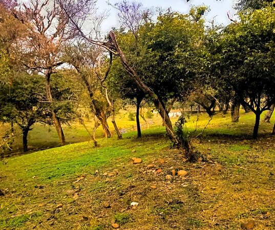 Jammu City Photo