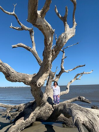 Not your ordinary Driftwood !!!