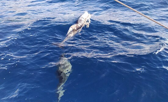 Seaborn catamaran dolphin and whale watching: Uma presença certa nestes passeios marítimos