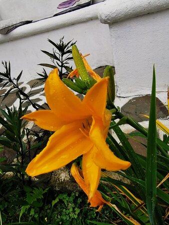 San Jeronimo, Κόστα Ρίκα: flowers...