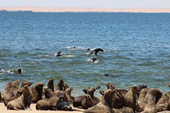 Sandwich Harbour Half Day 4x4 Excursion: Cape Fur Seals