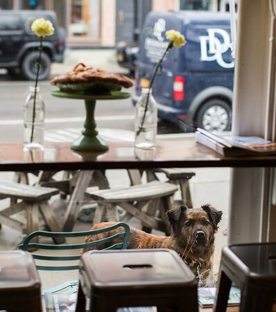 We love to see our four-legged friends outside our window!