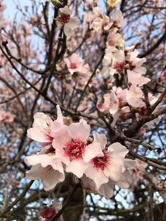 Quartu Sant'Elena, Italy: 30 gennaio... anticipo di primavera.