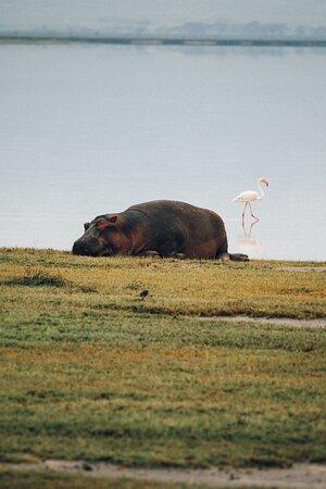 Парк Нгоронгоро: спящий бегемот