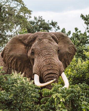 Парк Озеро Маньяра: слон