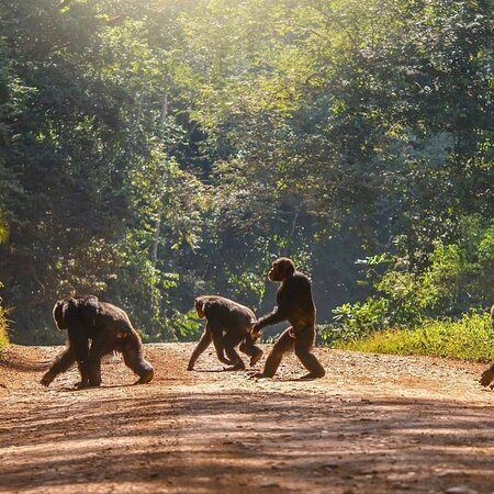 Murchison Falls National Park, Uganda: Africa Wild Safari
