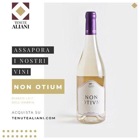 Ramazzano, Italy: Vini delle Tenute Aliani