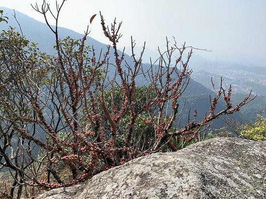 Mt. Yuanshan Scenic Resort