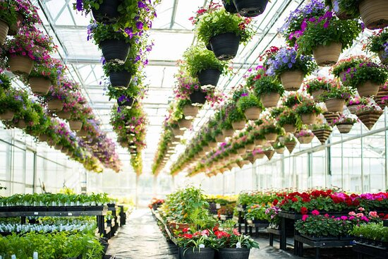 New Windsor, MD: May 1st, 2021 will  be the opening of the greenhouse! Hanging baskets, bedding plants and more!!