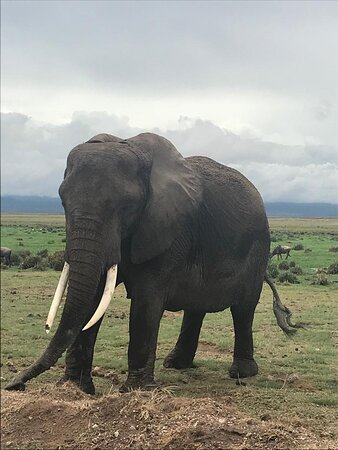 3 Days Masai Mara Special Safari: Elphant