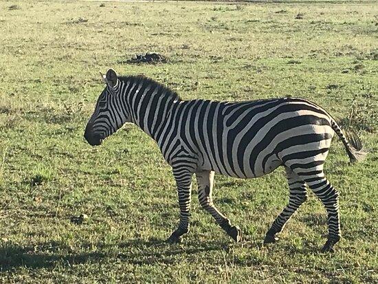 3 Days Masai Mara Special Safari: Zebra