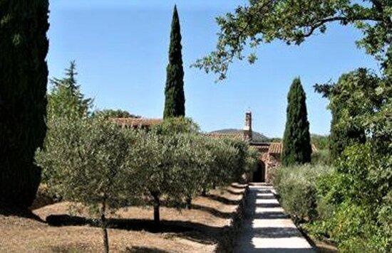 Cadre idyllique  d'oliviers et de vignes, boisé de  Cyprès.