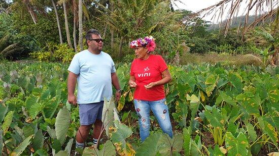 Excursion Tour de l'ïle avec Eléonore qui nous raconte avec passion les contes et légendes de son île, ici les champs de taro