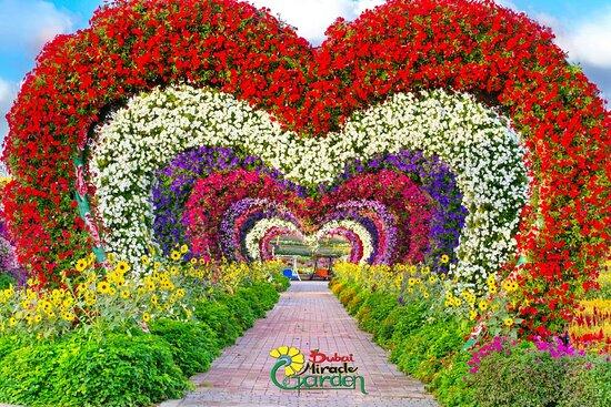 Дубай сад цветов дома на побережье океана купить