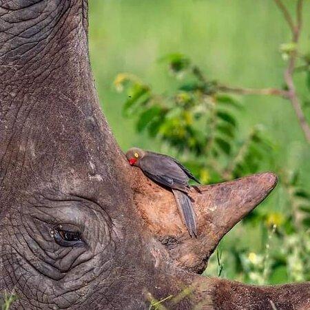 Arusha, Tanzania: Beautiful creatures awaiting for you to pay a visit.  Book with us: ospreysafari@gmail.com