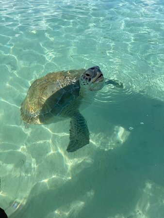 Captain Janssen and Da Salty Pig gave us the adventure of a lifetime! We loved every minute!! Cannot say enough about Captain Janssen. We are headed back in December with our kids and can't wait to take them out for another excursion. The sea turtles were my favorite thing EVER!