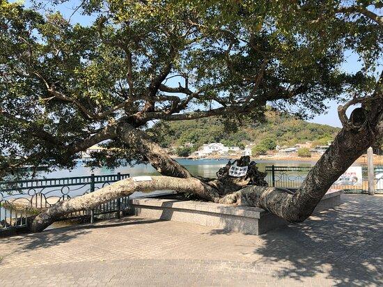 Kat O Lover's Tree