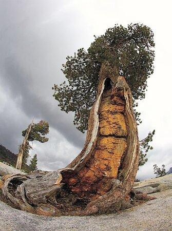Yosemite National Park, CA: Yosemite 7