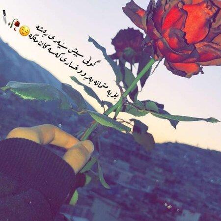 Erbil Province, Iraq: Agar gull nit drkish maba