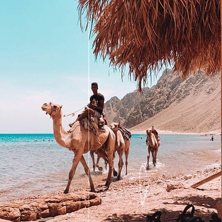 Дахаб, Египет: fourth day: we will get a safari by jeep and camel ride for 3 hours and get to nice hidden places for safari then we will get rest (here we finish our visit ti dahab ) fifth day :  we will stay on a nice camp till night and then go hiking on moussa mountain and visit saint catherine monastery also a tourist attraction known in sinai and then get tour camp and check out .(finish saint catherine )