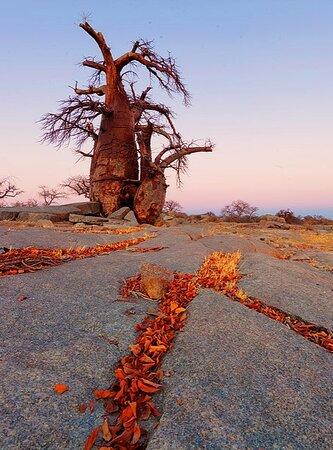 Makgadikgadi Pans National Park, بوتسوانا: Makgadikgadi 7