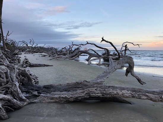 The shoreline of Driftwood Beach