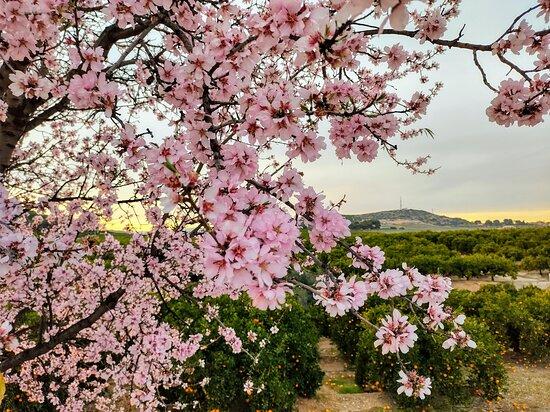 Valencia, Spain: Spring in winter