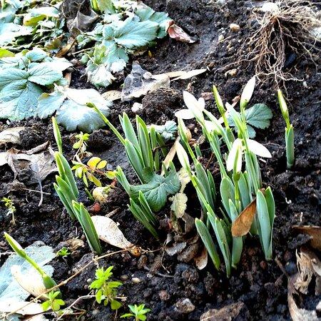 Bucharest, Romania: Spring in february?