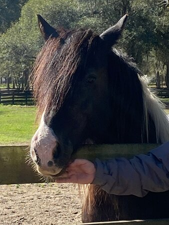 Gypsy Gold Horse Farm Tour with Entry Ticket: Gorgeous