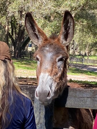Gypsy Gold Horse Farm Tour with Entry Ticket: Mules
