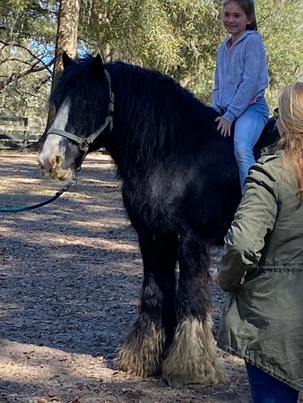 Gypsy Gold Horse Farm Tour with Entry Ticket: Beautiful Stallion
