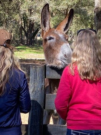 Gypsy Gold Horse Farm Tour with Entry Ticket: Hello!