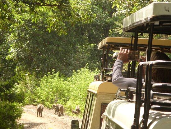 Mambo Tanzania Tours
