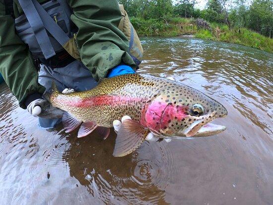 Bethel, AK: Catch and release Kwethluk rainbows!