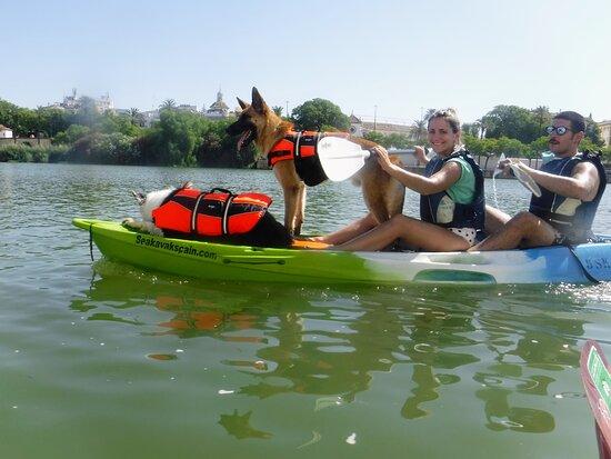 kayak con mascotas