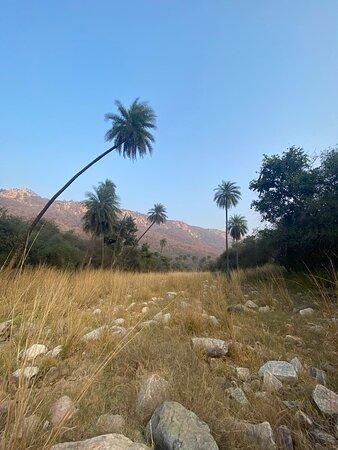 Sariska Safari area - loved the crisp winter air and afternoon sun.