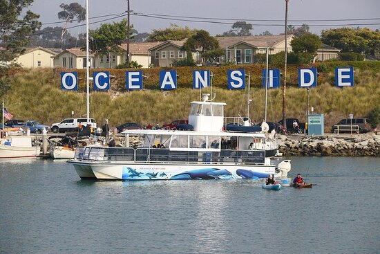 Shared Two-Hour Whale Watching Tours from Oceanside, CA