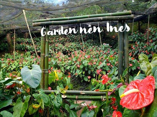 Garden Nén Ines