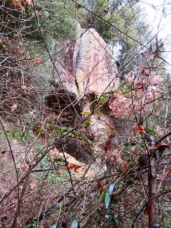 """Rovi e arbusti cercano di ostacolare la risalita dal fosso verso la """"cella"""""""