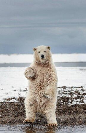 Gates Of The Arctic National Park and Preserve, AK: Arctic Gates 3