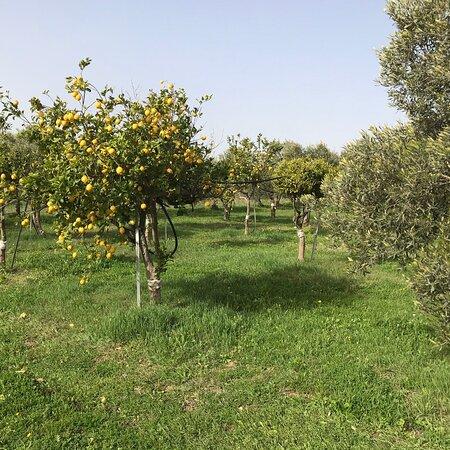 Maracalagonis, Italy: Sardegna oggi giornata di sole con temperatura di 22 gradi da godersi in campagna