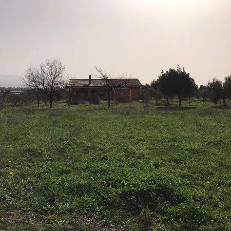 Maracalagonis, Italy: Sardegna giornata primaverile con 22 gradi che mi sono goduto in campagna