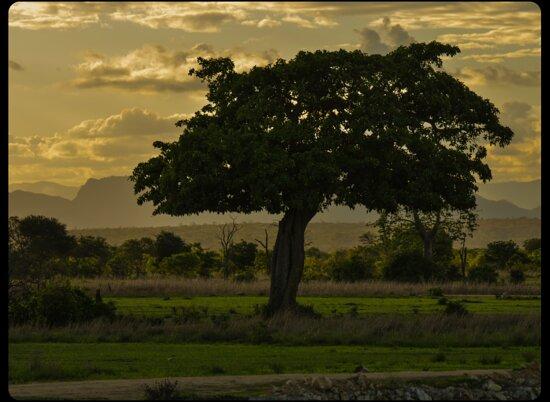 Mwambani Tours & Safaris