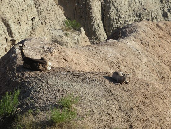 Badlands Wilderness Overlook